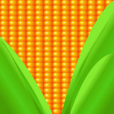 Sweetcorn pattern with leaves Stock Images