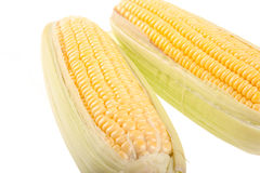 Sweetcorn on white background Royalty Free Stock Images