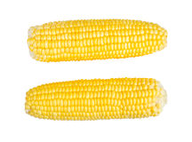 Sweetcorns isolate on white with clipping path Stock Photography