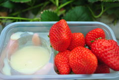Sweetened condensed milk and strawberries. Strawberries with sweetened condensed milk are popular on a farm in Japan Stock Photos