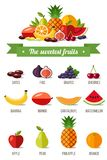 Sweetest fruits. Vector set of fruits illustrations. The sweetest fruits with names. Vector infographics, healty eating. Flat style Stock Photos