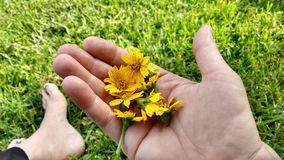 Sweetest gift. Yellow flowers,green field royalty free stock photography