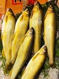 Sweetfish d'Ayu Photos libres de droits