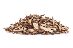 Sweetflag Root Royalty Free Stock Photography