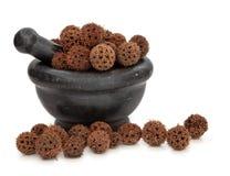 Sweetgum Fruit Herb Stock Image