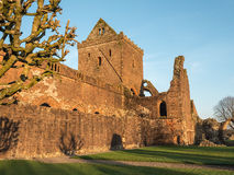 Sweetheart Abbey, Scotland. The ruins of Sweetheart Abbey , also known as Abbey of Dulce Cor, in the Galloway region in Scotland Stock Image