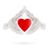 Sweethearts. Red heart between two white  flying doves Stock Photography