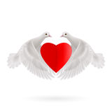 Sweethearts. White two doves holds red heart in wings Royalty Free Stock Image