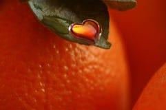 Sweetie brillante en la hoja anaranjada Fotografía de archivo