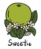 Sweetie fruit. Vector illustration of the sweetie with flower and leaves Stock Image