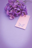 Sweetpea flowers tag vintage effect. Nostalgic bouquet of light purple sweet peas with a pink tag with a butterfly and additional copy space on a lilac Royalty Free Stock Images