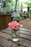 Sweets color roses in the glass vase Royalty Free Stock Image