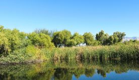 Sweetwater bagna Parkowy Tucson Arizona Fotografia Stock