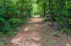 Sweetwater Creek Park Path Royalty Free Stock Image