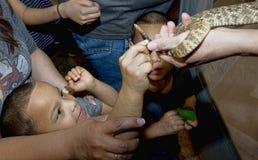 Sweetwater, Texas Rattlesnake Roundup Lizenzfreie Stockfotos