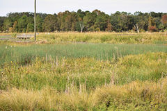 Sweetwater våtmarker parkerar Gainesville Florida Arkivfoton