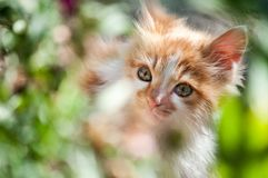 Sweety cat Royalty Free Stock Photos