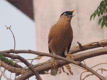 Sweety ptak Fotografia Stock