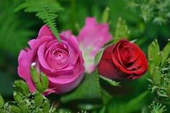 Swet kwiaty obraz stock