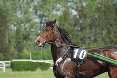 swety häst royaltyfria foton