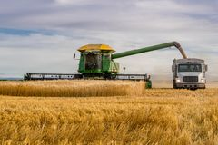 Swift Current, SK, Canada- Sept 8, 2019: Combine Unloading Wheat Into Grain Truck Stock Images