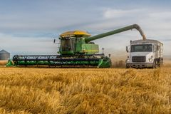 Swift Current, SK, Canada- Sept 8, 2019: Combine Unloading Wheat Into Grain Truck During Harvest Royalty Free Stock Photography