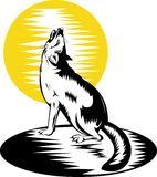 Swift fox or wolf howling at moon Stock Photography
