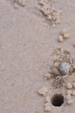 Swift land crab Stock Photo