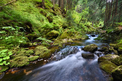 Swift mountain creek in a green valley Stock Image