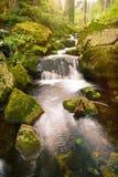 Swift mountain stream in a green valley Stock Photos