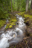 Swift moving stream. Royalty Free Stock Images