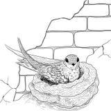 Swift op het nest vector illustratie