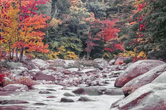 Swift river in Autumn White Mountains, New Hampshire Stock Images