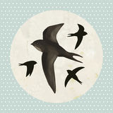 Swifts on old paper background Stock Photo