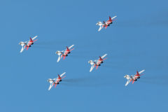 Swifts (Strizhi), Draufsicht Stockbild