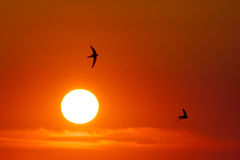 Swifty solnedgång Arkivfoto