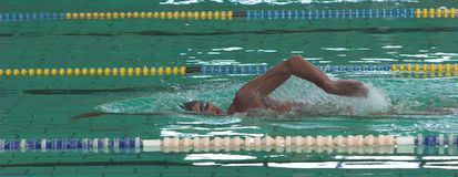 Swim Stock Images