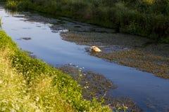 Swim dog Stock Photo