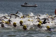 Swim fight Royalty Free Stock Image