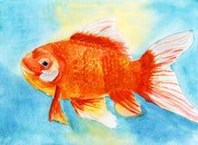 Swim goldfish watercolor Royalty Free Stock Images