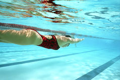 Swim Practice Royalty Free Stock Photography
