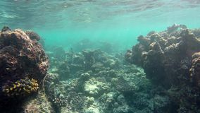 Swim through a reef. On the Maldives stock footage