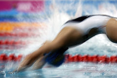 Swim start 3. A woman backstroke swimmer dives into the pool at the start of a race Royalty Free Stock Photography