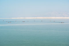 Swimers in Dead sea, Ein Bokek, Israel. Royalty Free Stock Images
