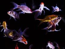 Swiming around Royalty Free Stock Photography