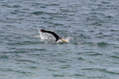 Swiming in the ocean Stock Photos