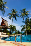Swiming pool and coconut tree Royalty Free Stock Images