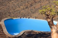Swiming pool in a lodge. In Namibia Stock Photo