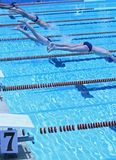 Swimmer. Swimming competition,the  jump start Stock Images