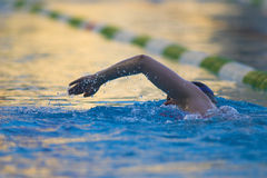 Swimmer. Training in the pool Stock Photography